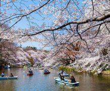Xin visa visa du lịch Nhật bản có cần xin giấy phép nhập cảnh không?