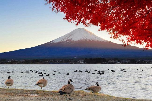 xin visa Nhật Bản 1