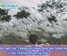 Ngẩn ngơ sắc trắng với mùa hoa lau lãng mạn ở núi Dương Minh xứ Đài