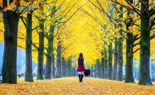Vai trò của sổ tiết kiệm khi xin visa du lịch Hàn Quốc 5